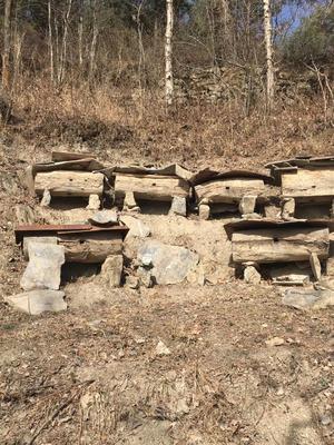甘肃省陇南市武都区土蜂蜜 塑料瓶装 100% 2年