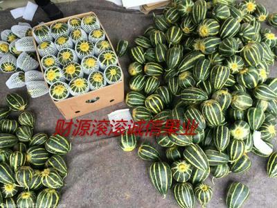 山东省潍坊市奎文区冰糖子甜瓜 0.5斤以上