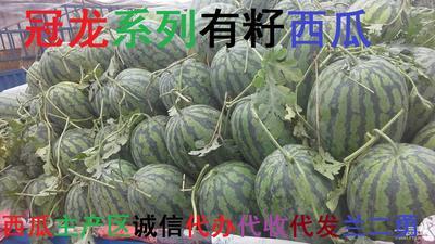河南省开封市通许县冠龙西瓜 有籽 1茬 9成熟 10斤打底