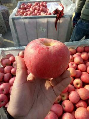 山东省日照市莒县红富士苹果 纸袋 表光 75mm以上
