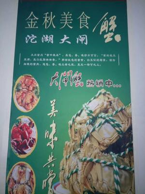安徽省蚌埠市五河县沱湖大闸蟹 3.5-4.0两 母蟹