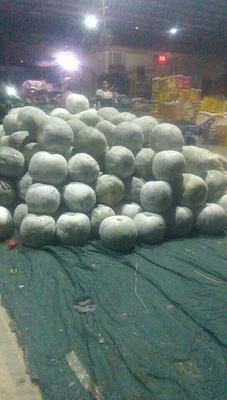 江西省赣州市全南县白皮冬瓜 15斤以上 白霜