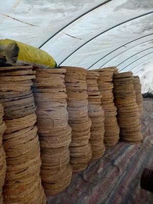 黑龙江省绥化市北林区豆饼饲料