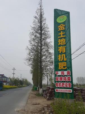江苏省盐城市东台市栾树