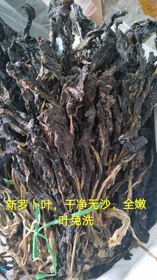 河南省郑州市惠济区白萝卜叶 15~20cm