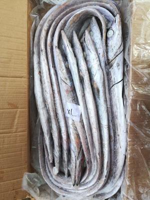 福建省福州市马尾区伊朗带鱼 野生 1-1.5公斤