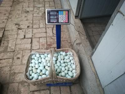 四川省成都市彭州市乌鸡蛋 食用 箱装
