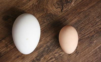 河北省廊坊市固安县鲜鹅蛋 食用 散装