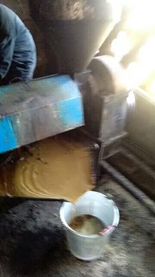 广西壮族自治区河池市凤山县茶叶籽油