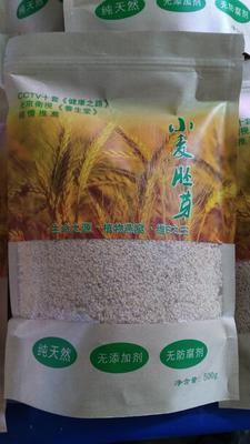 山东省枣庄市滕州市小麦胚芽