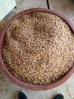 云南省普洱市景谷傣族彝族自治县普洱小粒咖啡豆