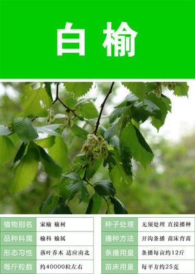 江苏省苏州市吴中区榆树种子