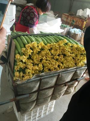 河南省濮阳市濮阳县鲜花丝瓜 40cm以上