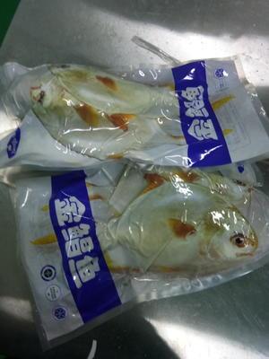 甘肃省武威市凉州区金鲳鱼 野生 1-1.5公斤