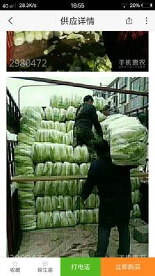 山东省临沂市郯城县北京三号大白菜 15斤以上 毛菜