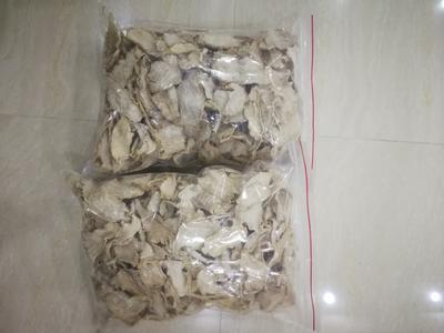 广东省汕尾市陆丰市白萝卜 1~1.5斤