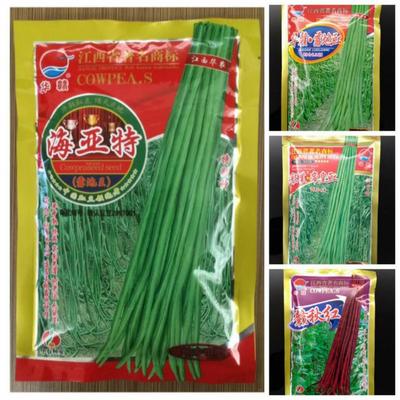 山东省潍坊市奎文区豆角种子 ≥97%