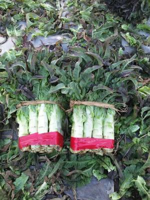 云南省大理白族自治州大理市紫叶香莴笋 50-60cm 2斤以上