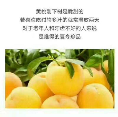 湖南省株洲市炎陵县炎陵黄桃 60mm以上 4两以上
