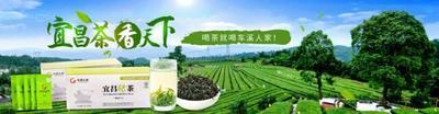 湖北省宜昌市点军区车溪人家2018新茶 散装 特级