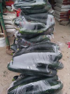 安徽省宿州市砀山县黑皮南瓜 4~6斤 长条形