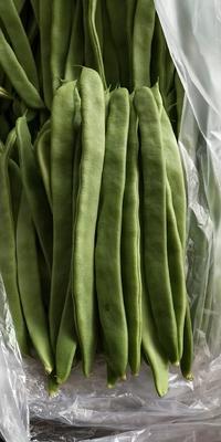 山东省潍坊市青州市绿扁豆 1cm以上 15cm以上