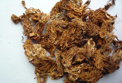 云南省昆明市东川区扫把菌 散装 1年以上