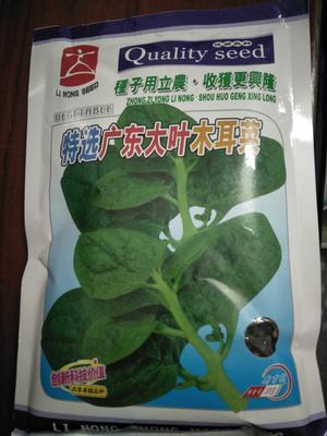 广东省汕头市澄海区木耳菜种子