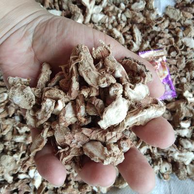 广西壮族自治区贵港市桂平市沙姜干母姜片 瓶装 12-18个月