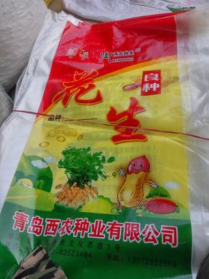 江苏省连云港市东海县花生果 袋装 6-12个月