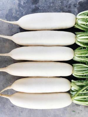 山东省青岛市莱西市白萝卜 1~1.5斤