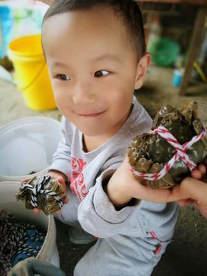 江苏省南京市高淳区固城湖大闸蟹 3.0-3.5两 公蟹