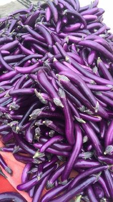 广西壮族自治区南宁市西乡塘区紫光圆茄 4两以上