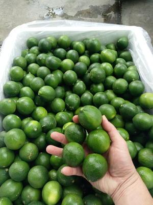云南省红河哈尼族彝族自治州河口瑶族自治县越南青柠檬 1 - 1.5两