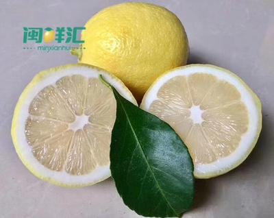 海南省海口市琼山区安岳柠檬 1.6 - 2两