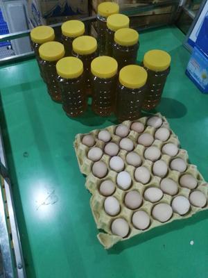 广东省惠州市博罗县土蜂