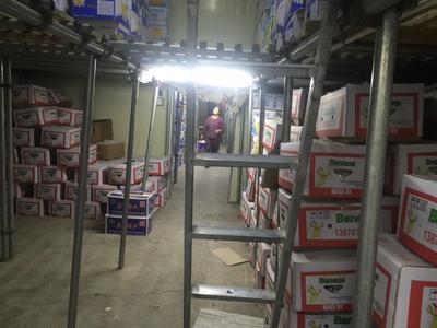 广东省广州市番禺区广东香蕉1号 七成熟 70斤以上