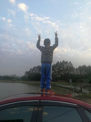 广东省惠州市博罗县池塘草鱼 人工养殖 1-1.5龙8国际官网官方网站