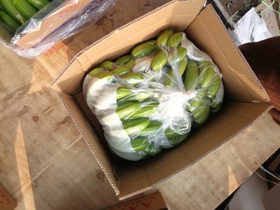 云南省西双版纳傣族自治州景洪市威廉斯香蕉 七成熟 40 - 50斤