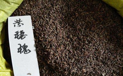 江苏省宿迁市沭阳县紫憓槐种子