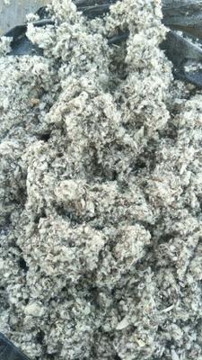 新疆维吾尔自治区阿克苏地区阿克苏市棉籽壳