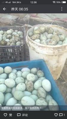 安徽省滁州市凤阳县青皮鸭蛋 食用 散装