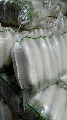 湖北省天门市天门市韩国白萝卜 1~1.5斤