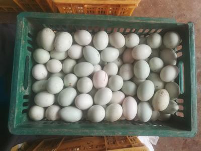 海南省海口市美兰区青皮鸭蛋 食用 箱装