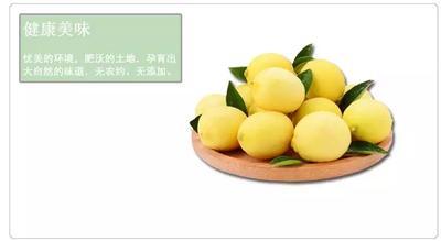 广东省广州市白云区尤力克柠檬 2.7 - 3.2两