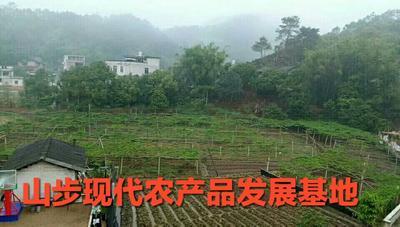 广西壮族自治区贵港市平南县紫香一号百香果 70 - 80克