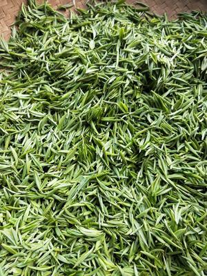 湖北省恩施土家族苗族自治州宣恩县各种高中低档的绿茶 散装 一级