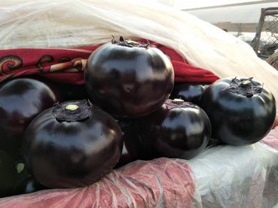 山东省聊城市东昌府区紫光圆茄 5两以上