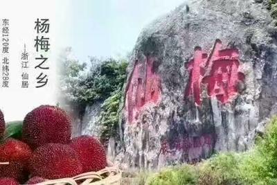 浙江省台州市仙居县仙居杨梅 3 - 4cm