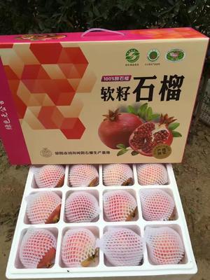 河南省郑州市荥阳市突尼斯软籽石榴 0.3 - 0.5斤